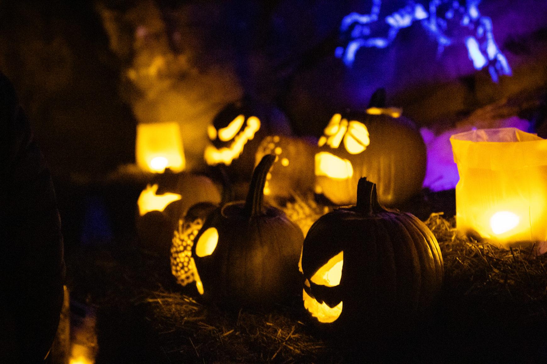 Penn State Arboretum To Host Annual Pumpkin Festival